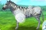 Opieka nad Zebrą