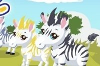 Opieka nad Zebrą 2