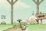 Owce, Owce do Domu