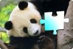 Puzzle z Panda